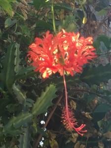 Reclaimed anger - flowering